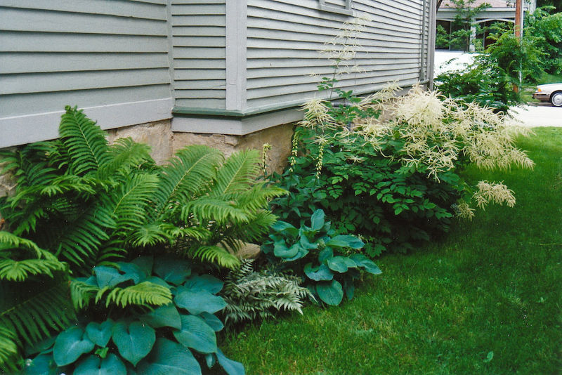 Landscaping The Side Of My House : Each little world my garden odyssey no room to grow