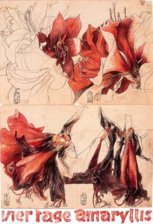 7642_2601329~4-Tage-Amaryllis-Poster