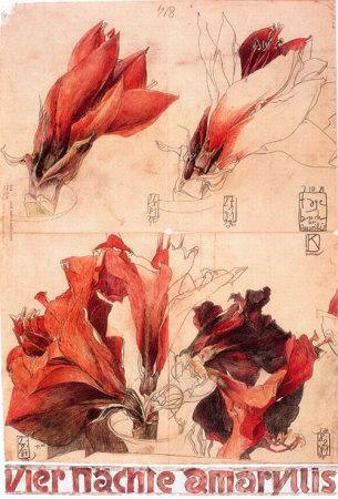 7643_2601328~4-Naechte-Amaryllis-Poster