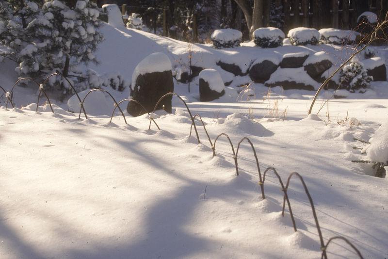 Hoops in snow