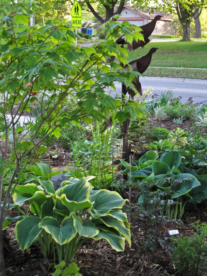 Ed's Garden-1
