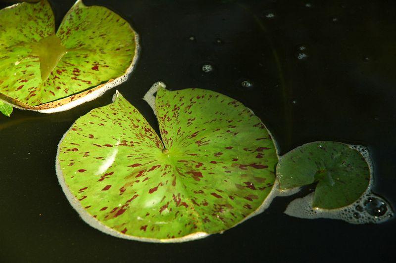 Green-8