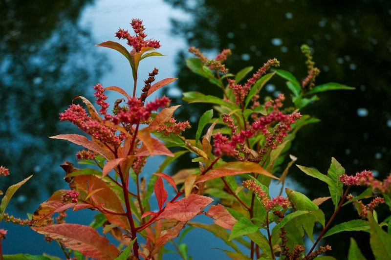 Fall Pastels-14