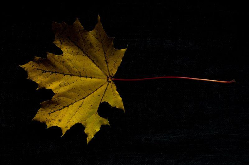 !5 leaves-1