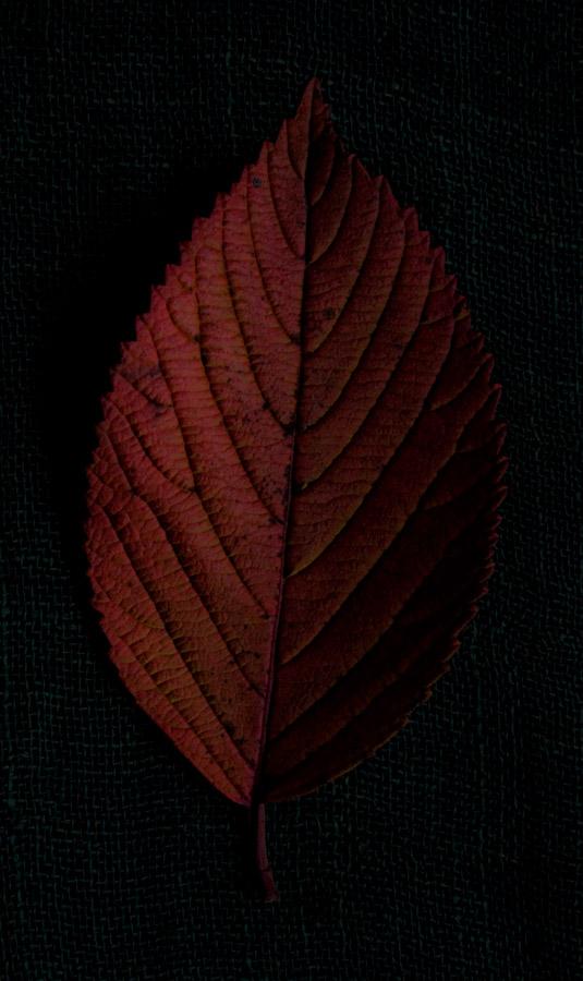 !5 leaves-2