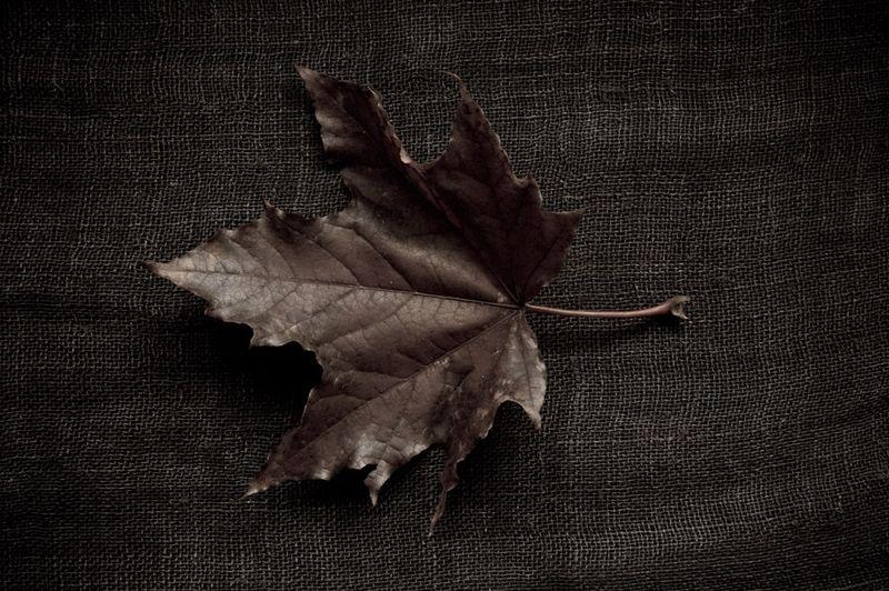 !5 leaves-4