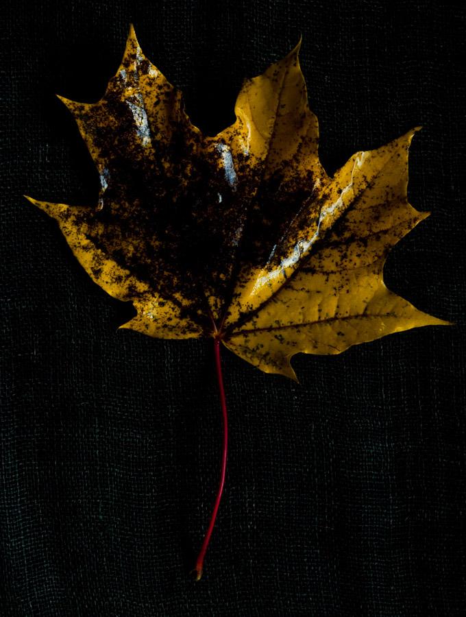 !5 leaves-5