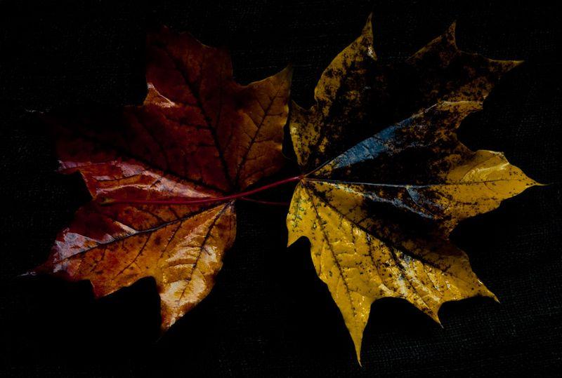 !5 leaves-7