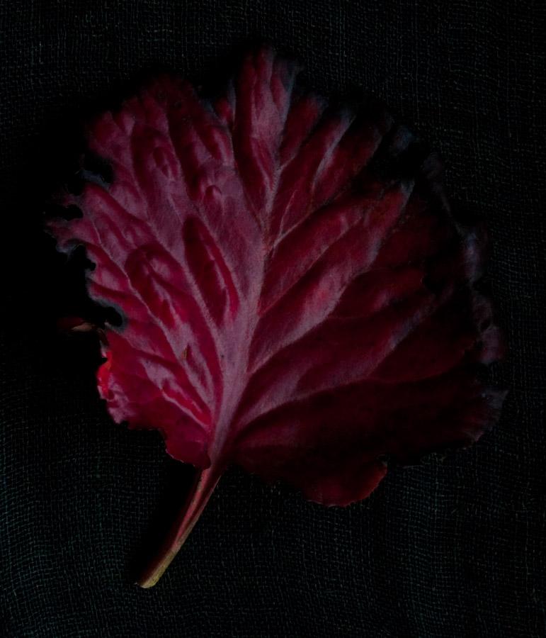 !5 leaves-9