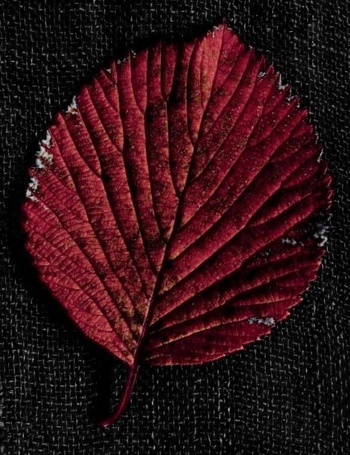 !5 leaves-11