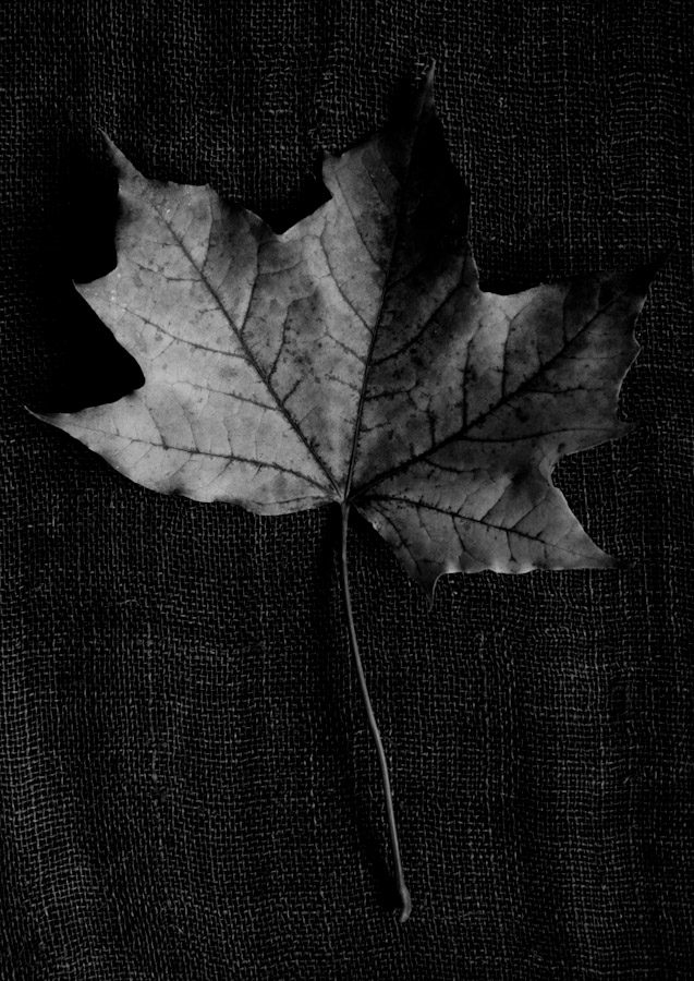 !5 leaves-14