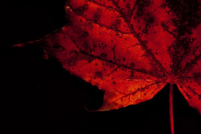!5 leaves-15