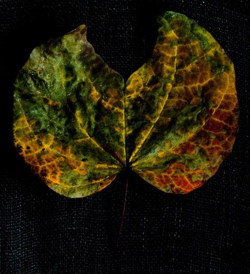 !5 leaves-3