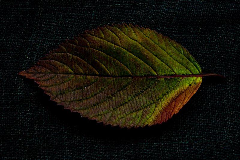 !5 leaves-6