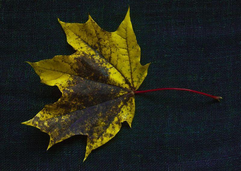 !5 leaves-10