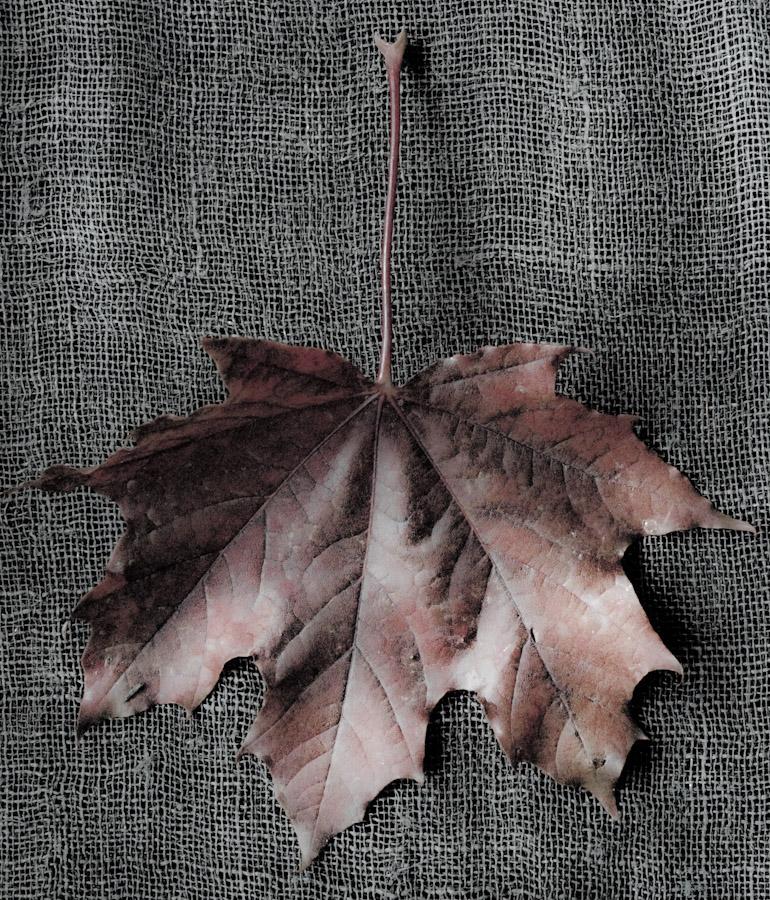 !5 leaves-12