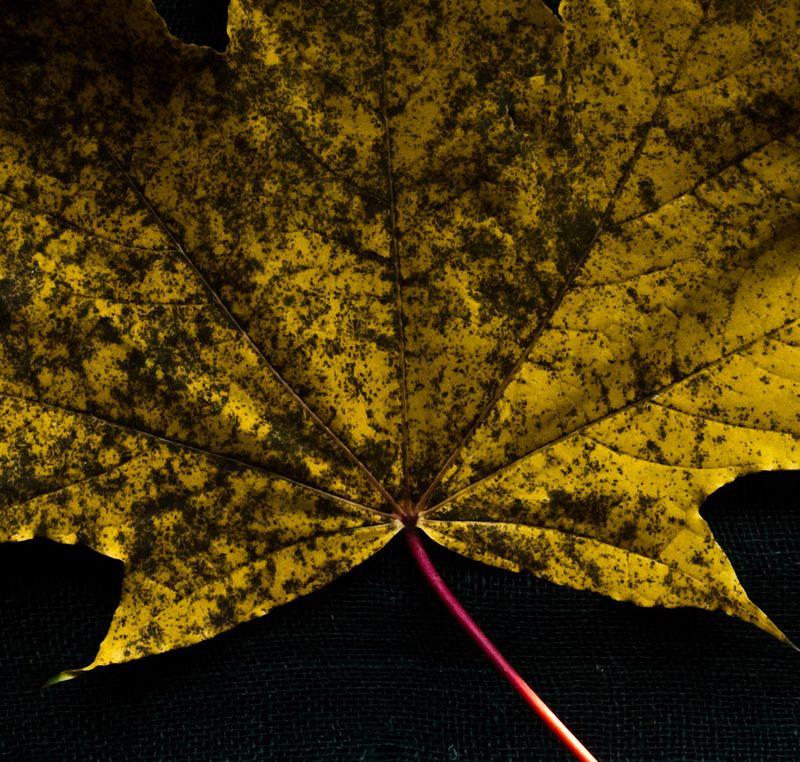 !5 leaves-13