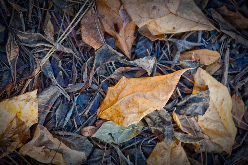 Last leaf-3