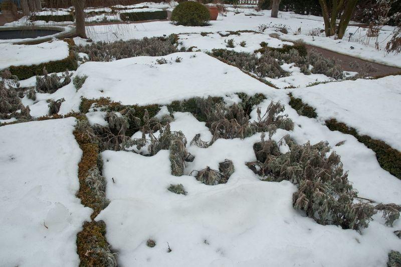 CBG in Winter-5
