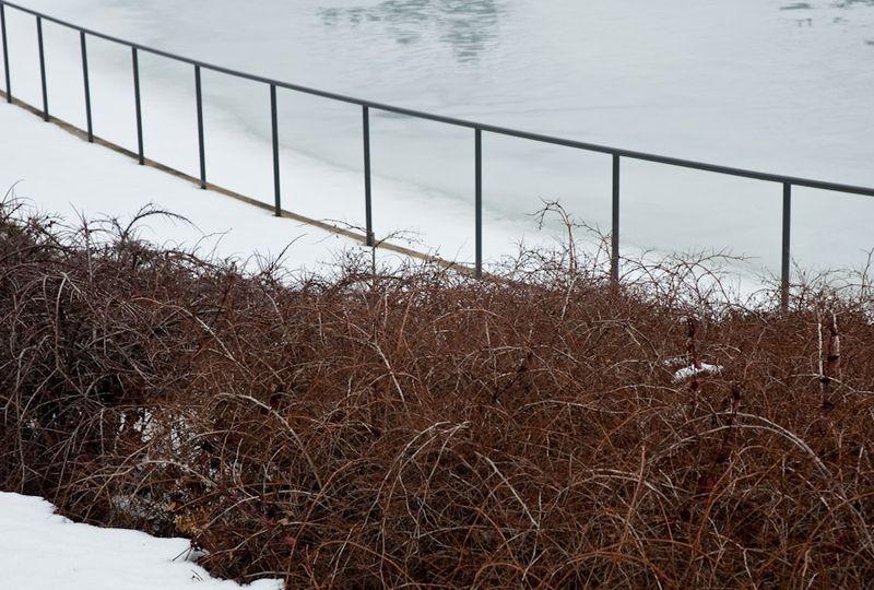 CBG in Winter-16