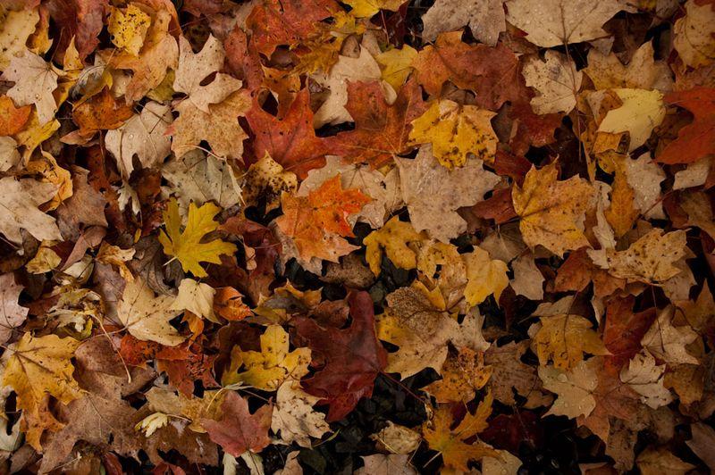Leaf Harvest-6