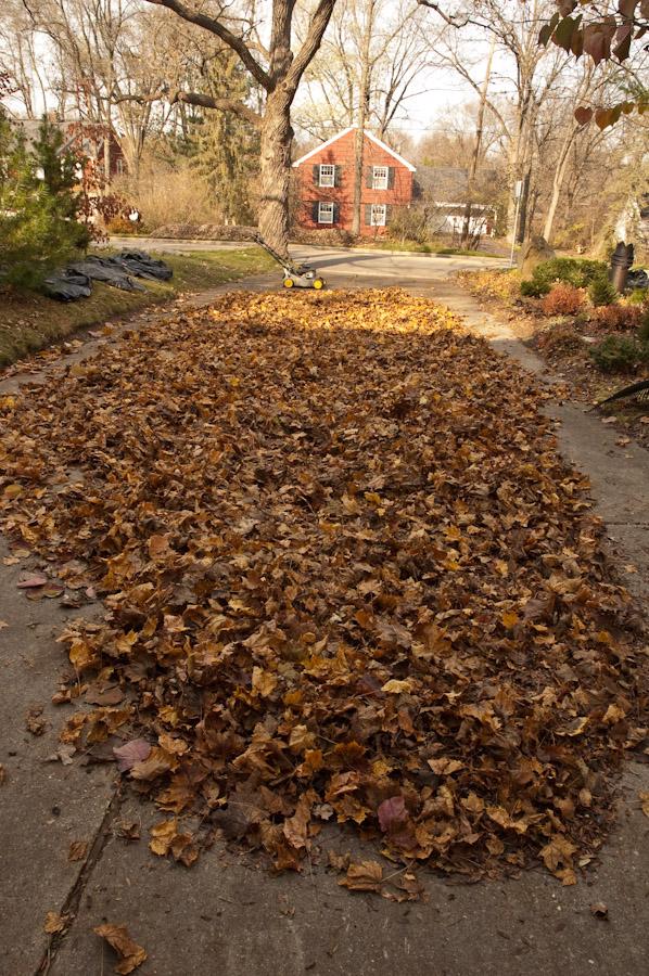 Leaf Harvest-7
