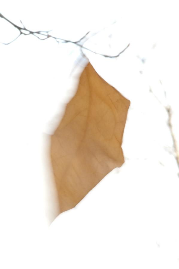 Last leaf-2