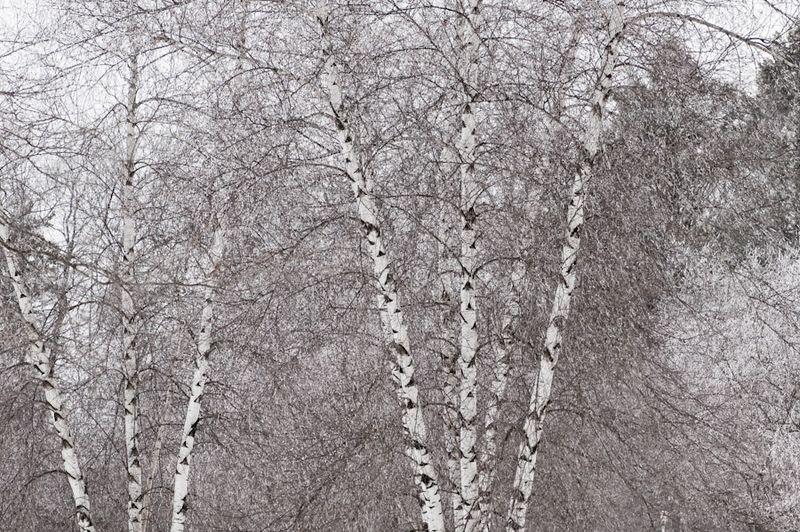 White and Paperwhite-5