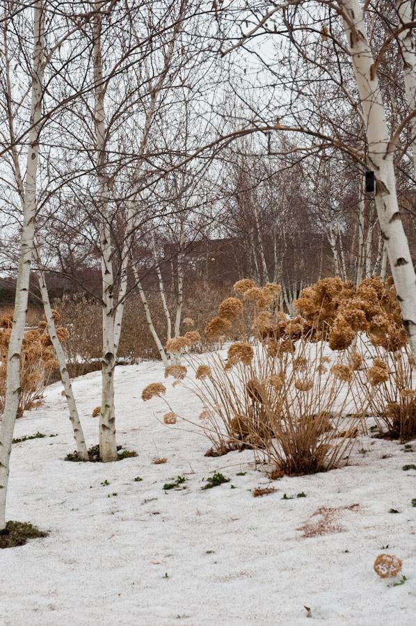 CBG in Winter-14