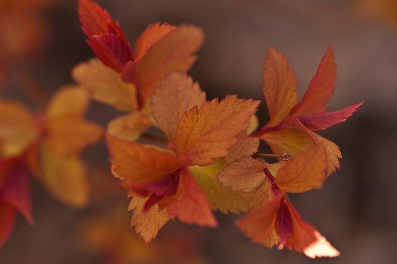 Foliage Followup 4-16-3