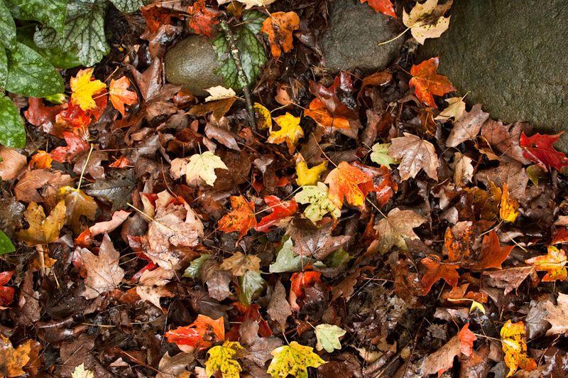 Fall Pics-1