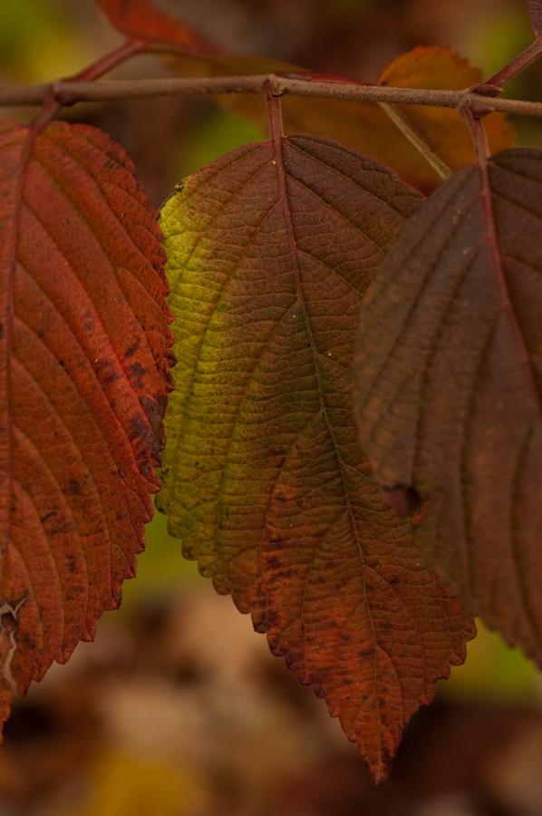 GBBD Oct 2010-23