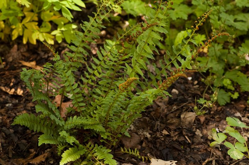 Trees and Ferns-16