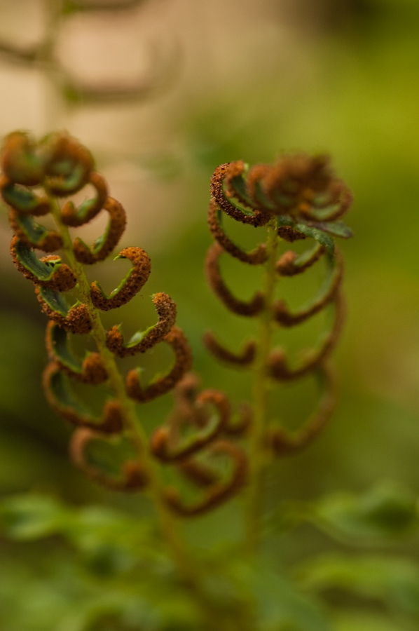 Trees and Ferns-15