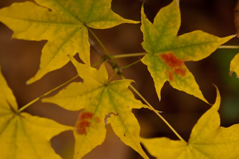GBBD Oct 2010-11