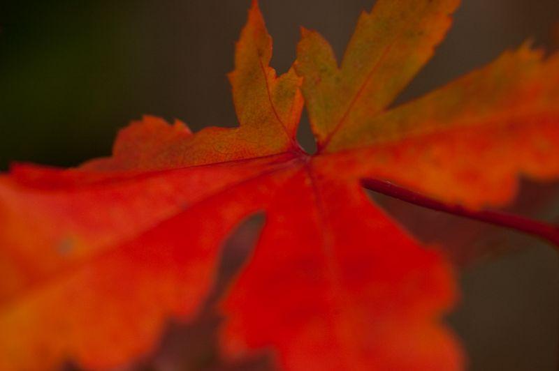 GBBD Oct 2010-14
