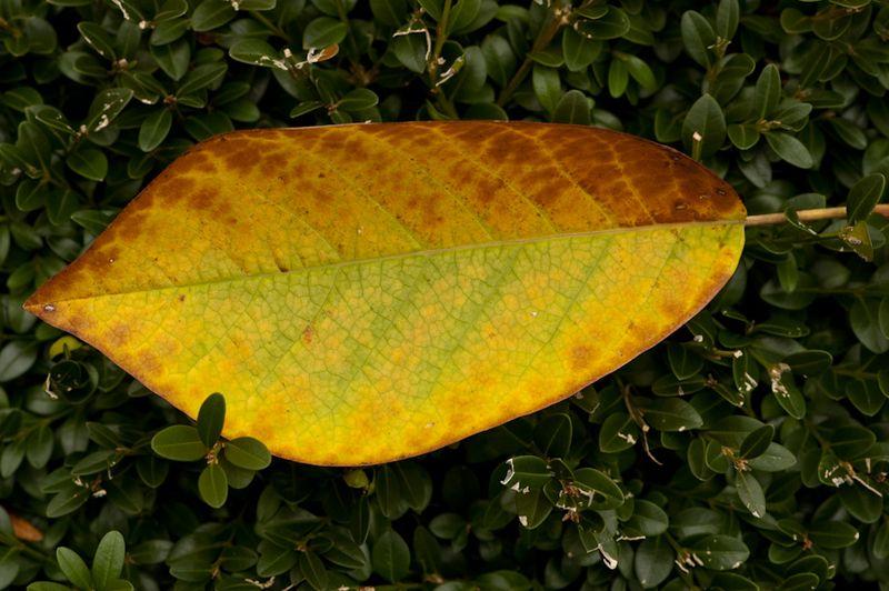GBBD Oct 2010-15