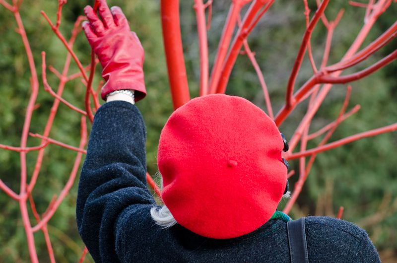 Red Twigs-2