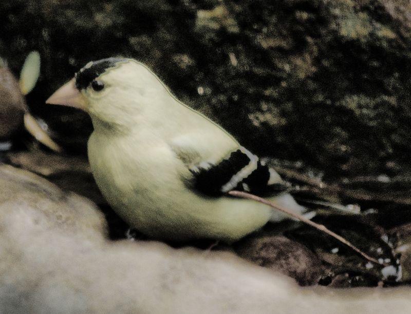 Birds-7-2