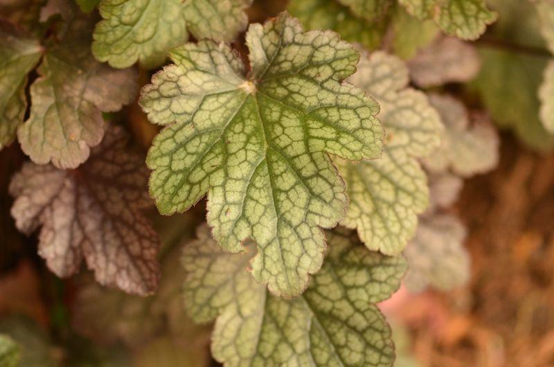 Foliage Followup 7-11-2