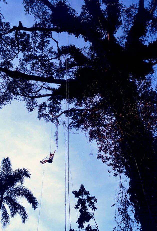 70-1. Great kapok climb