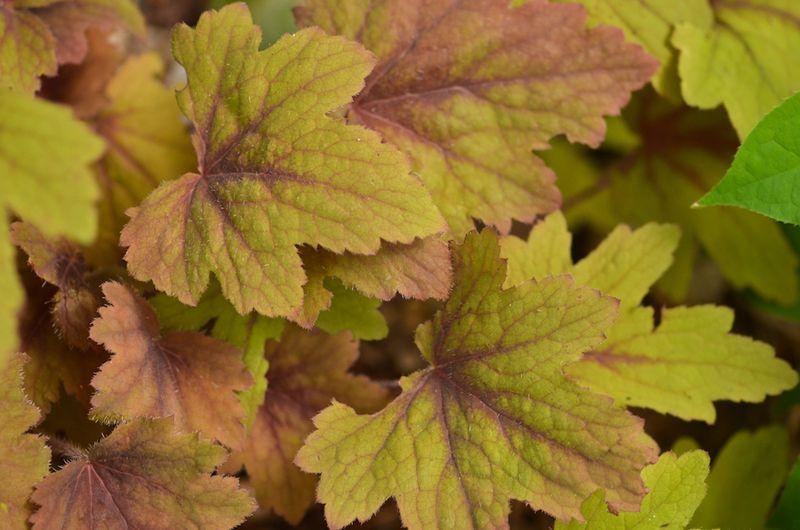 Foliage Followup 7-11-4