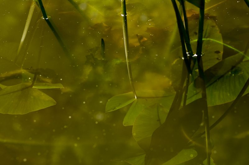 Pond and Greens-7