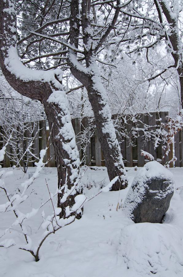 Snow Storm-2