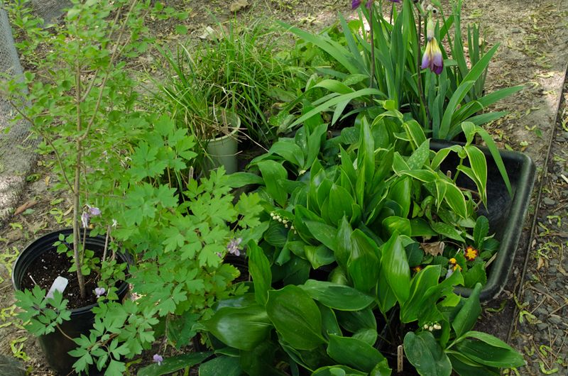 Plant Sale Plants-5