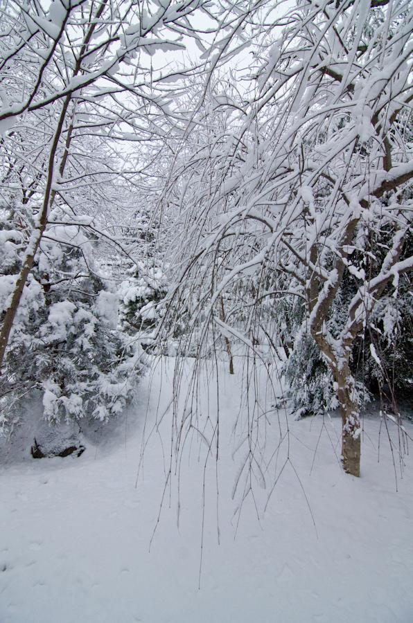 Snow Storm-3