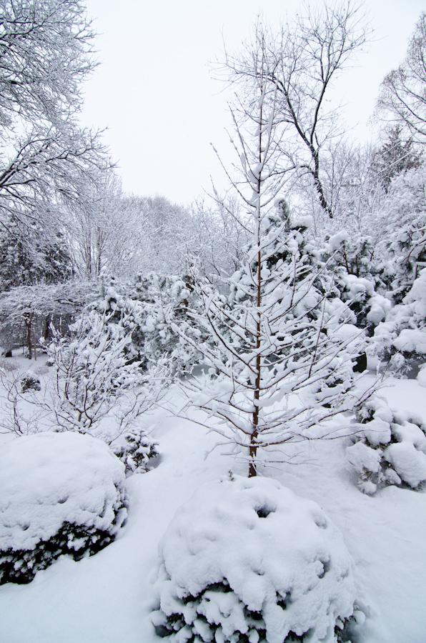 Snow Storm-4