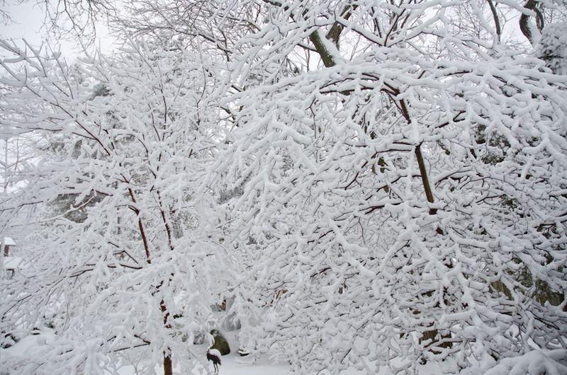 Tibet-Snow-4