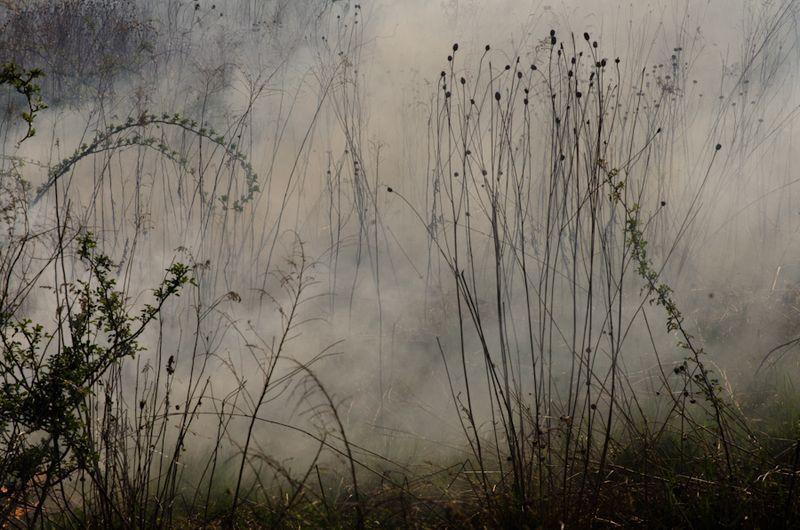 Prairie Burn-13