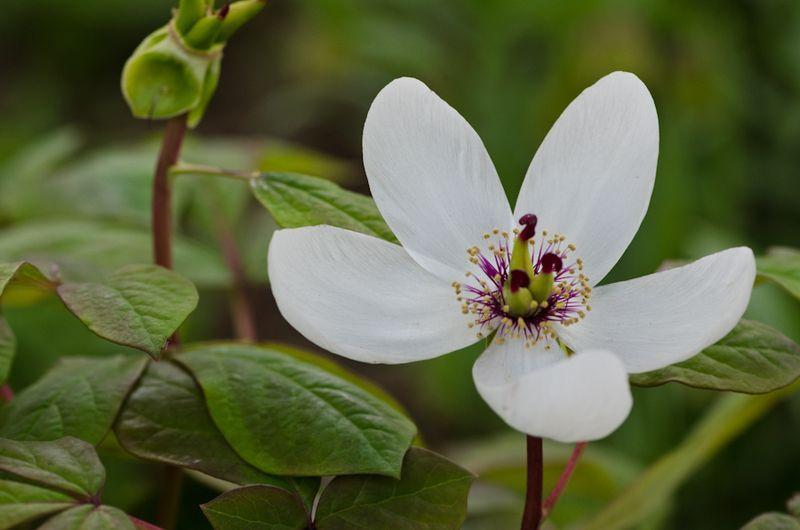 White April-7